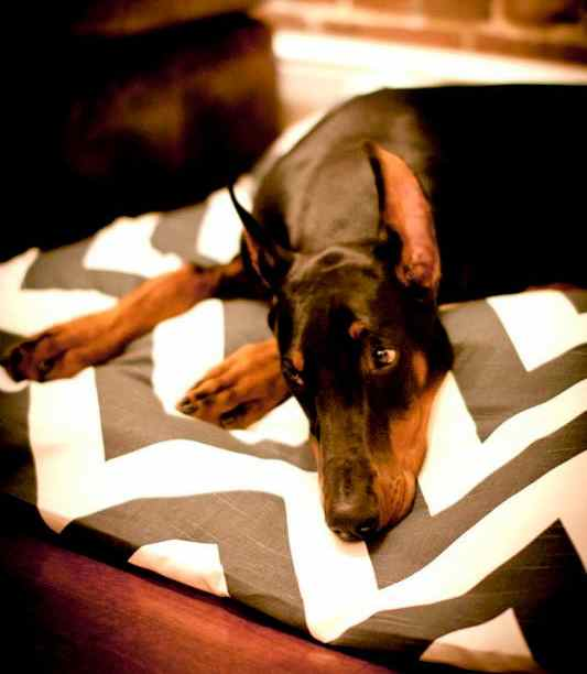 Bow Wow Chevron Pet Beds