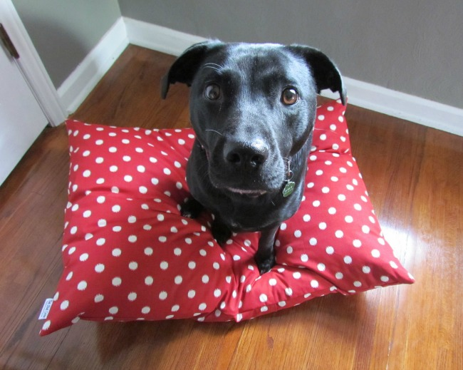 Polka dot Ikat Pet bed