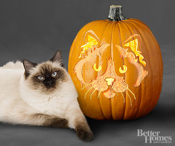 Ragdoll Cat Pumpkin Carving Pattern Stencil