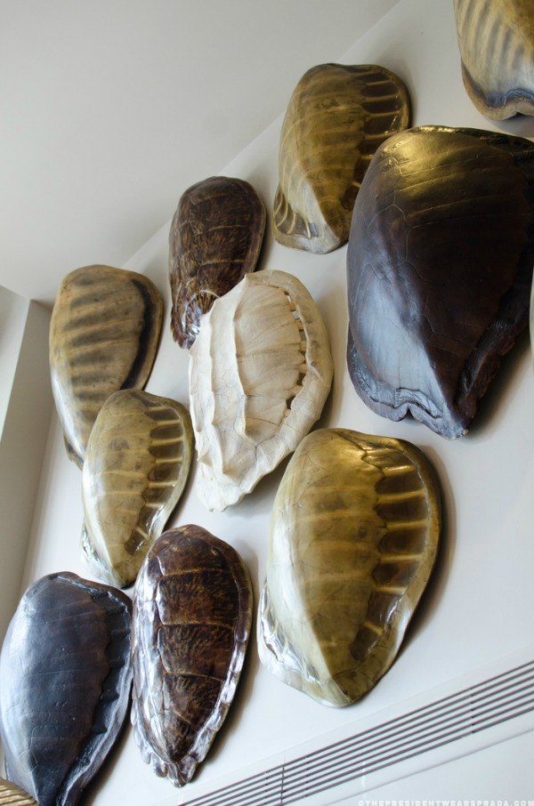 Faux tortoise shells hung on wall in a collage