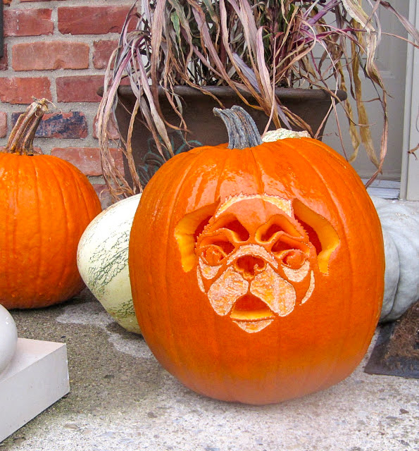 Loving this pug pumpkin!! Link to the pug pumpkin carving stencil included in post!