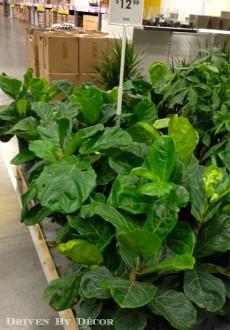 IKEA's New Indoor Plants