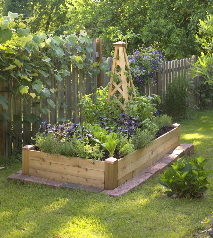Small Space Garden Ideas: Creating Our First Vegetable Garden: Advice Please
