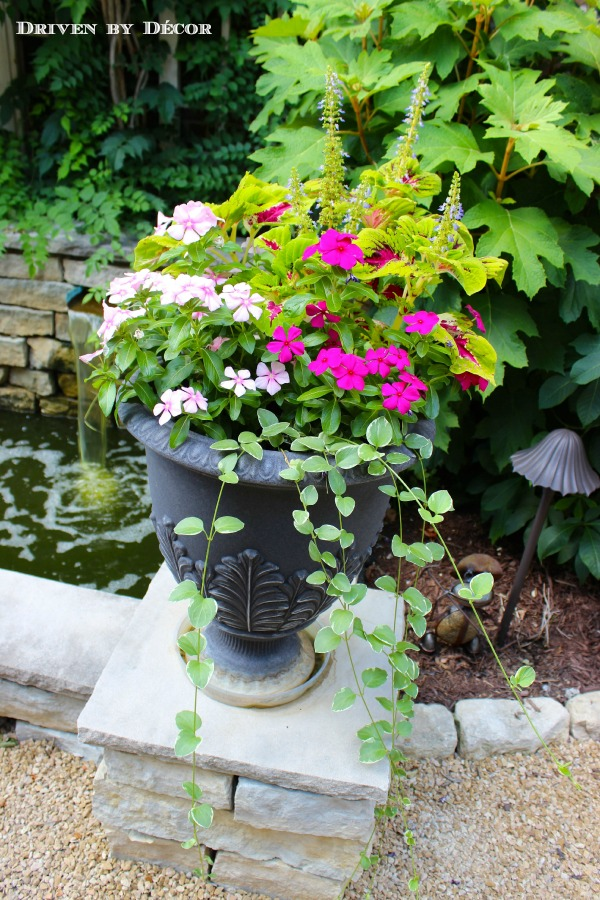 Flowers For Outdoor Planters Creating The Perfect Mix
