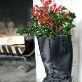 Christmas Decorations - Riding Boots Filled with Holly