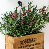 Nesting herb crates filled with holiday greenery and berries