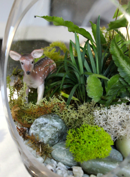 Creating a Terrarium (that I'm gonna try sooo hard not to kill…)