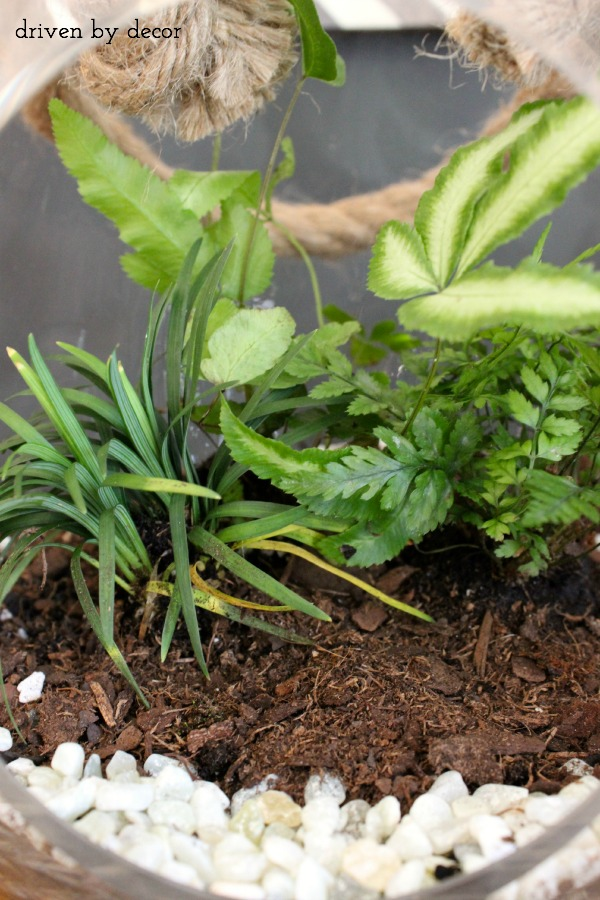 How To Make A Terrarium - Step 2 Add Soil and Plants