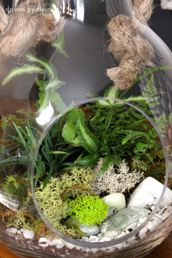 How to Create a Terrarium - Step 3 Add Moss and Larger Rocks