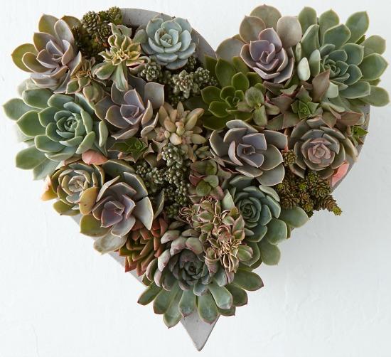 Succulent Heart Garden