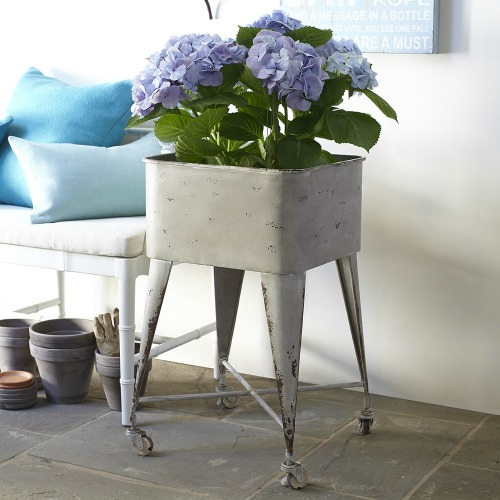 Wisteria: Gardener's Plant Stand
