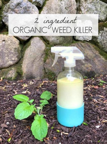 2-Ingredient Organic Weed Killer That Works!