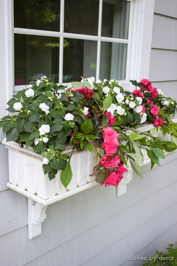 Begonias and double impatiens in window boxes