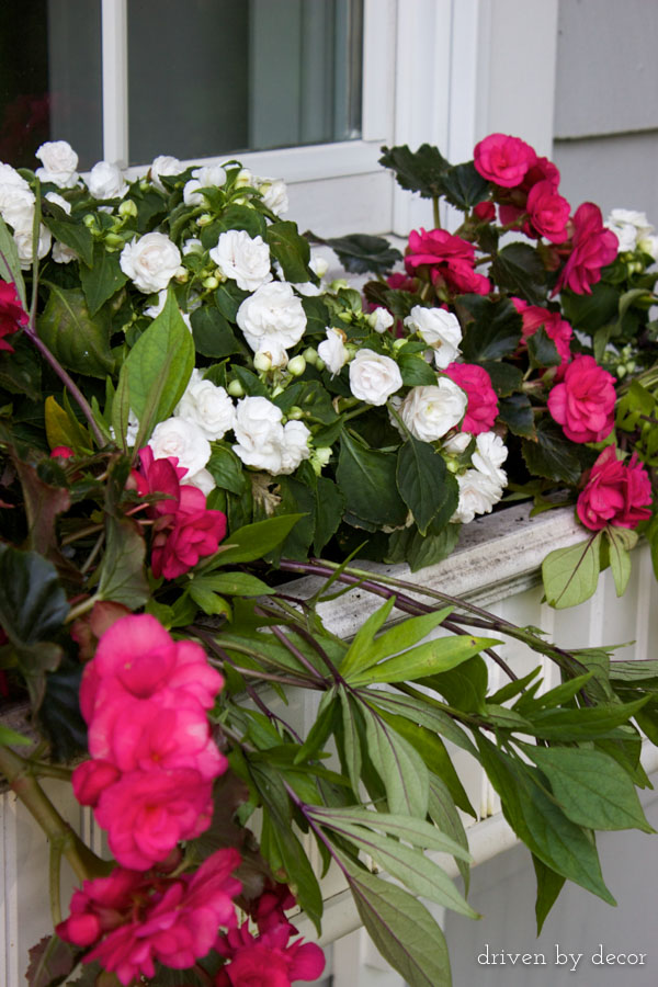 Window boxes with flowers that thrive in shade or partial sun