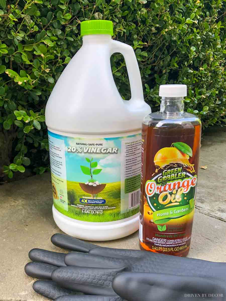 A simple recipe for organic weed killer spray that WORKS!
