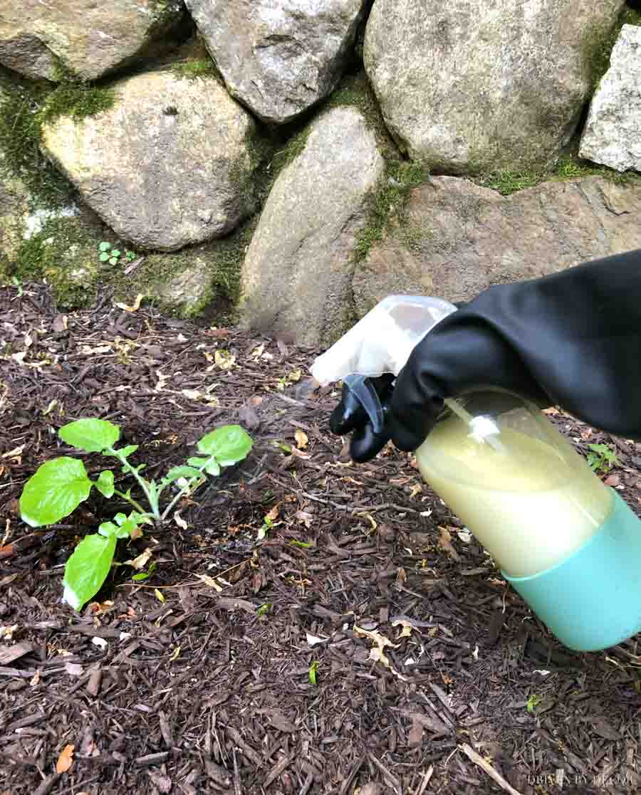Organic weed killer spray with two simple ingredients that WORKS!