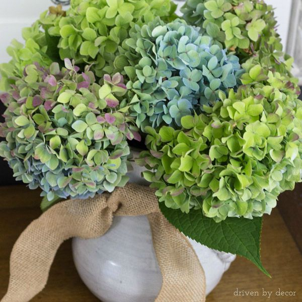 Beautiful fall hydrangeas