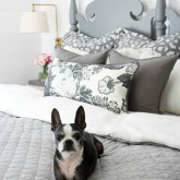 Our Boston terrier enjoying our newly madeover master bedroom!
