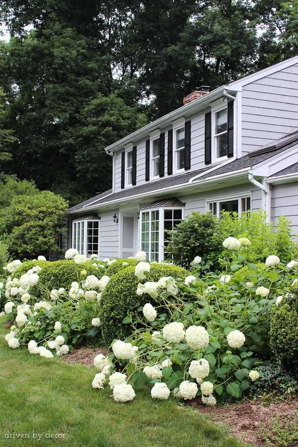 Our Connecticut Home | Benjamin Moore Coventry Gray | White trim | Black shutters and door | Bay windows | Hydrangeas