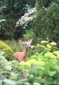 How to Keep Deer From Eating Your Plants!