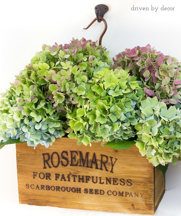 Fall hydrangeas in wall-hanging herb crate