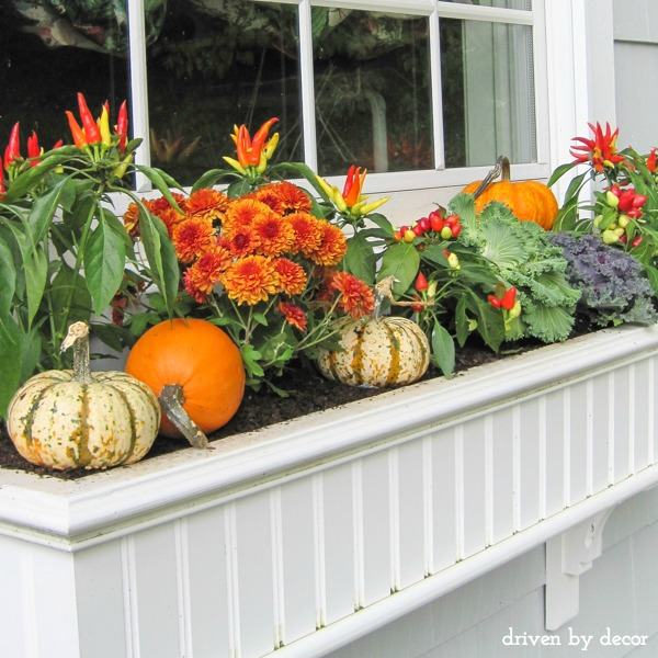 Fall window boxes with mums, peppers, pumpkins, kale, and cabbage