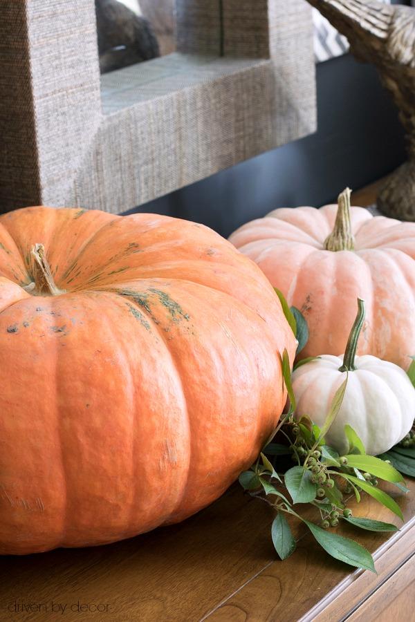 A trio of pumpkins for fall decorating