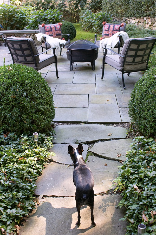 Flagstone walkway surrounded by pachysandra and round boxwoods