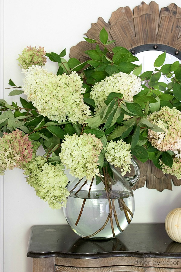 Large glass jug filled with fall hydrangeas
