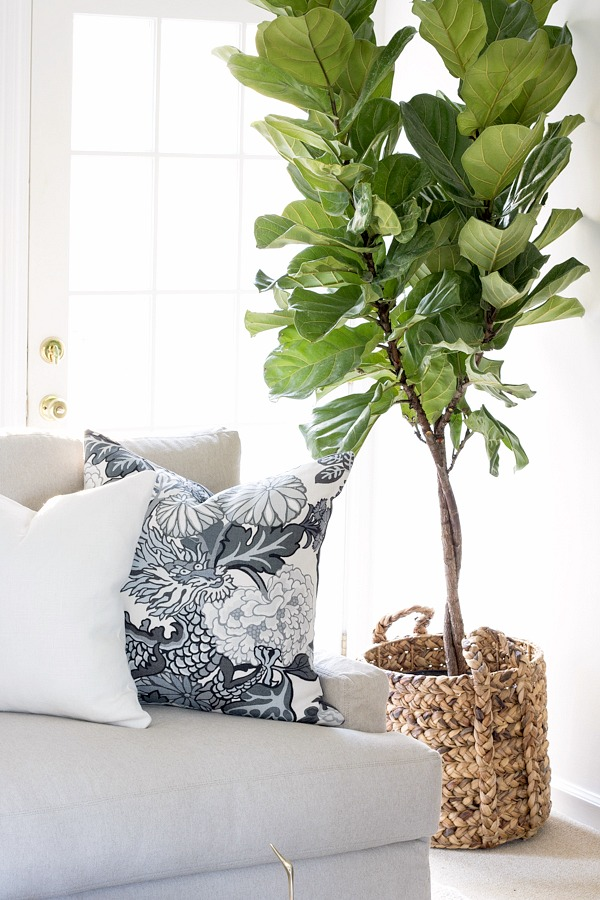"A woven basket is the perfect ""pot"" for an indoor tree! Link to basket included in post!"