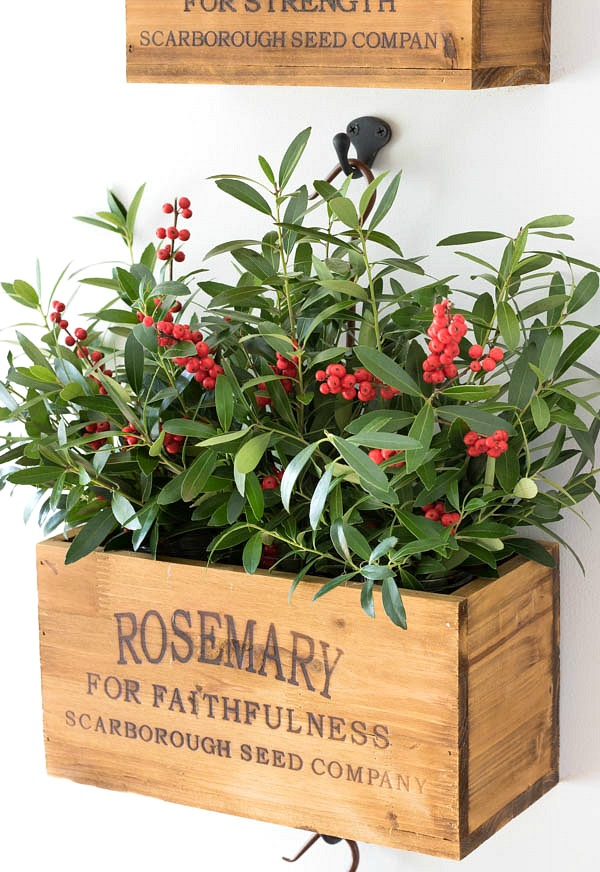 Nesting herb crate filled with boxwood branches and berries