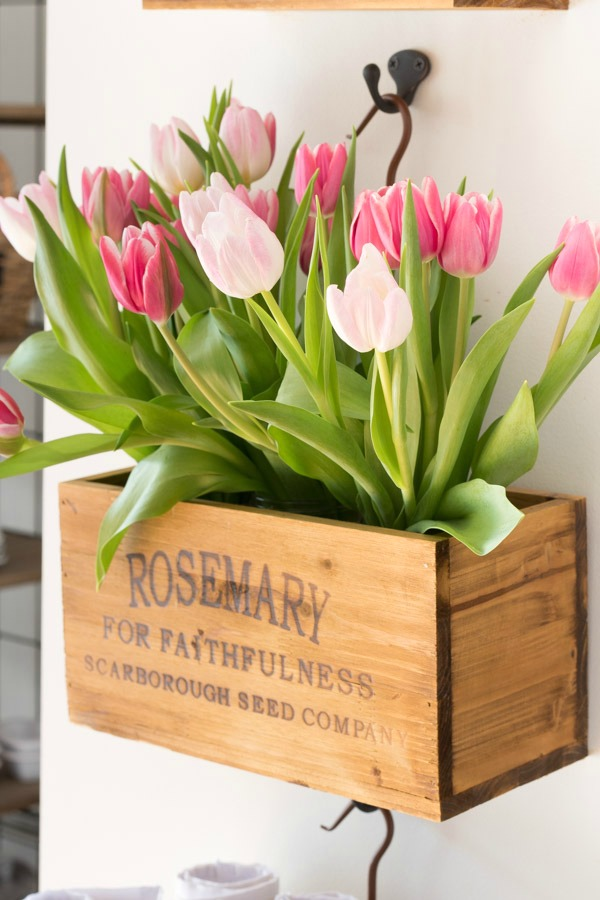 Spring tulips in hanging herb crates
