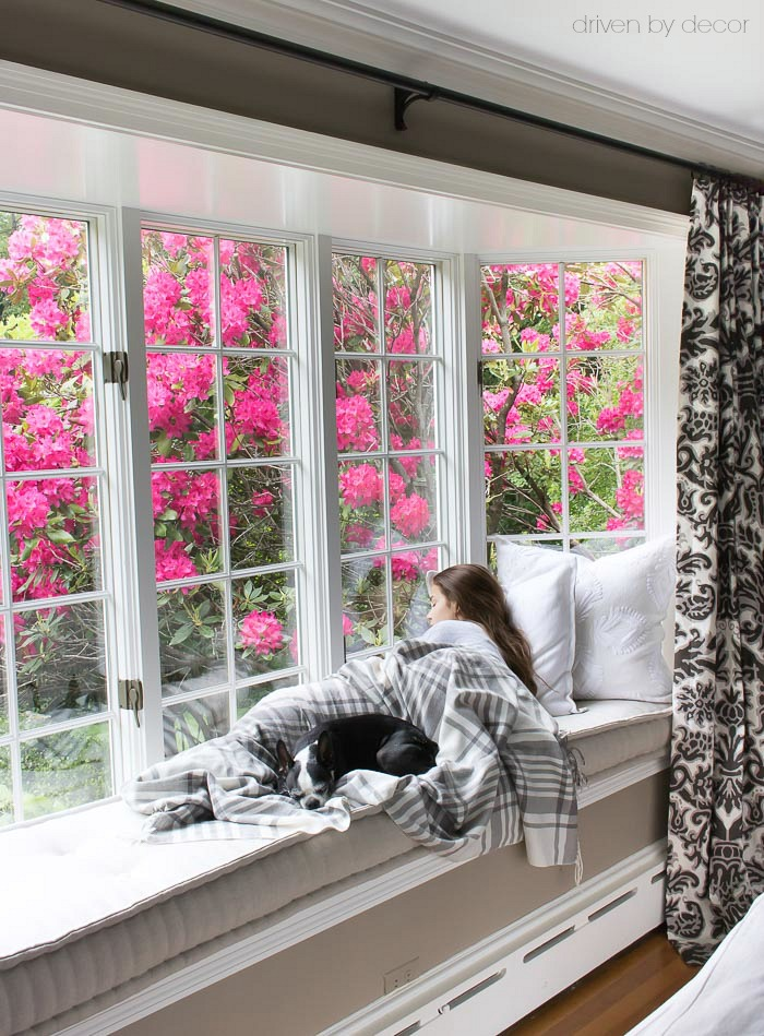 Window seat built into bay window with flower rhododendron tree outside - beautiful!