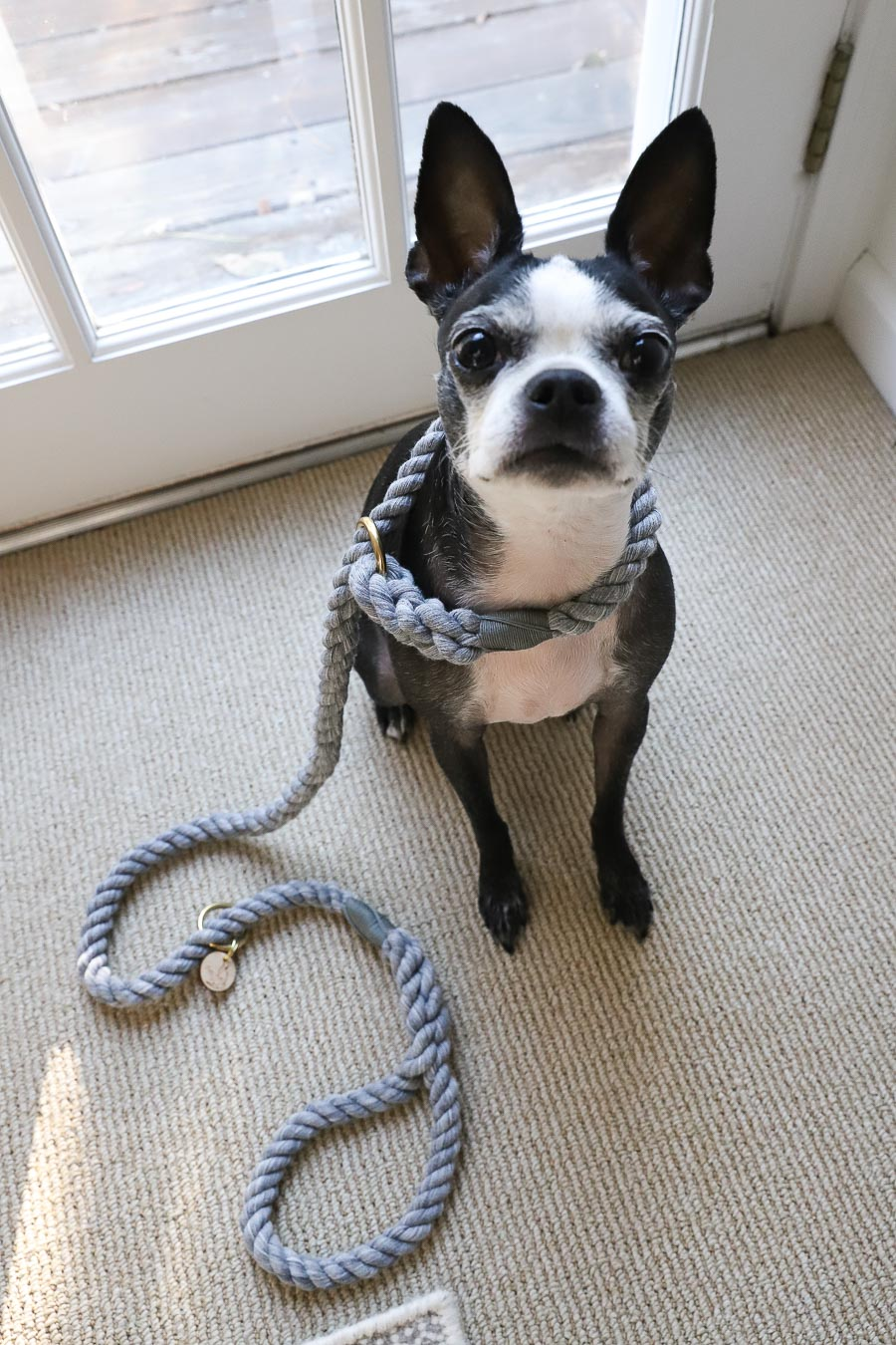 The softest dog leash ever! Comes as a slip leash like this one for quick potties or a regular leash or Euro lead!