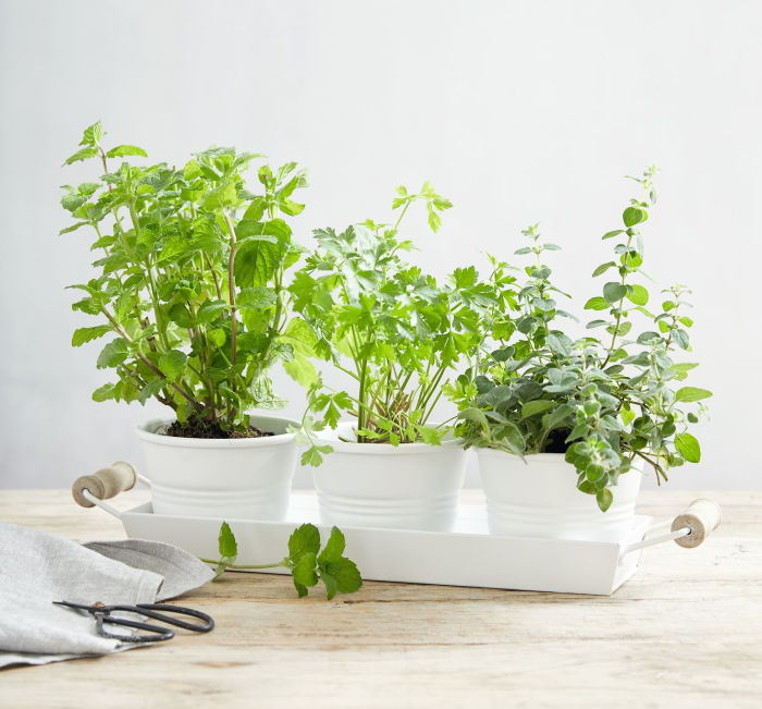 The cutest set of 3 herb pots and tray - use to create your own indoor herb garden!