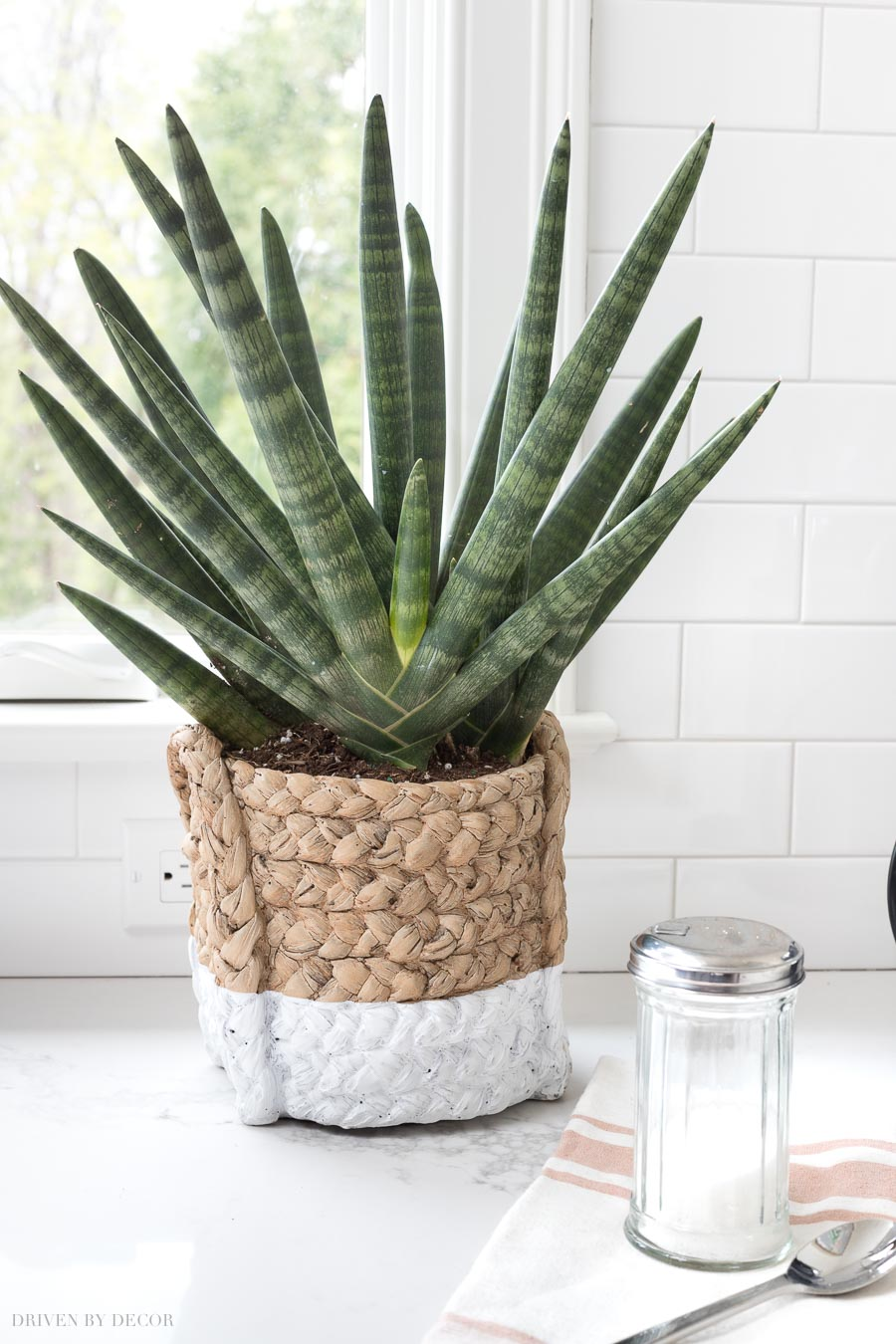 Love this color dipped ceramic pot that looks like a basket!