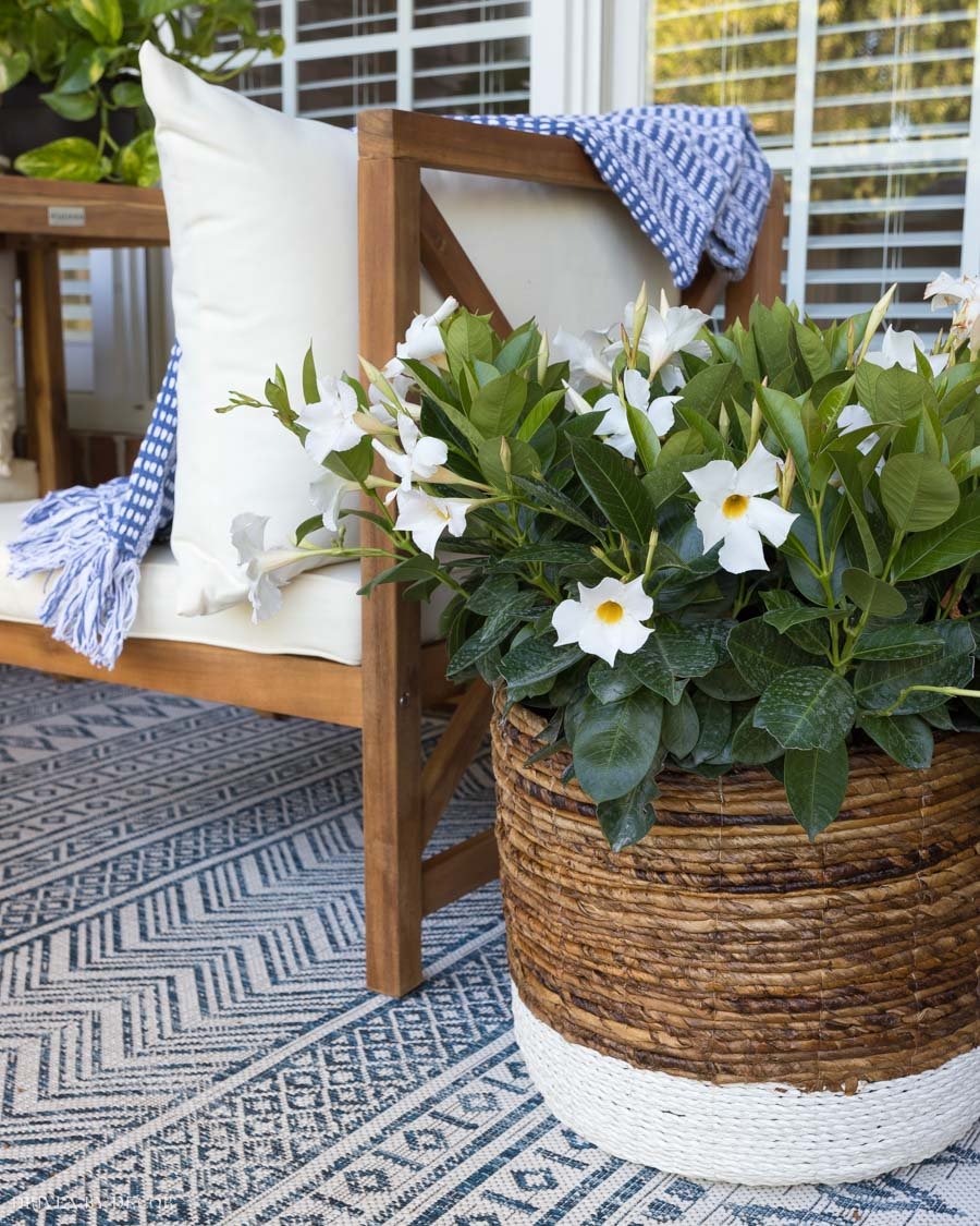Gorgeous basket holding a plant on the back porch!
