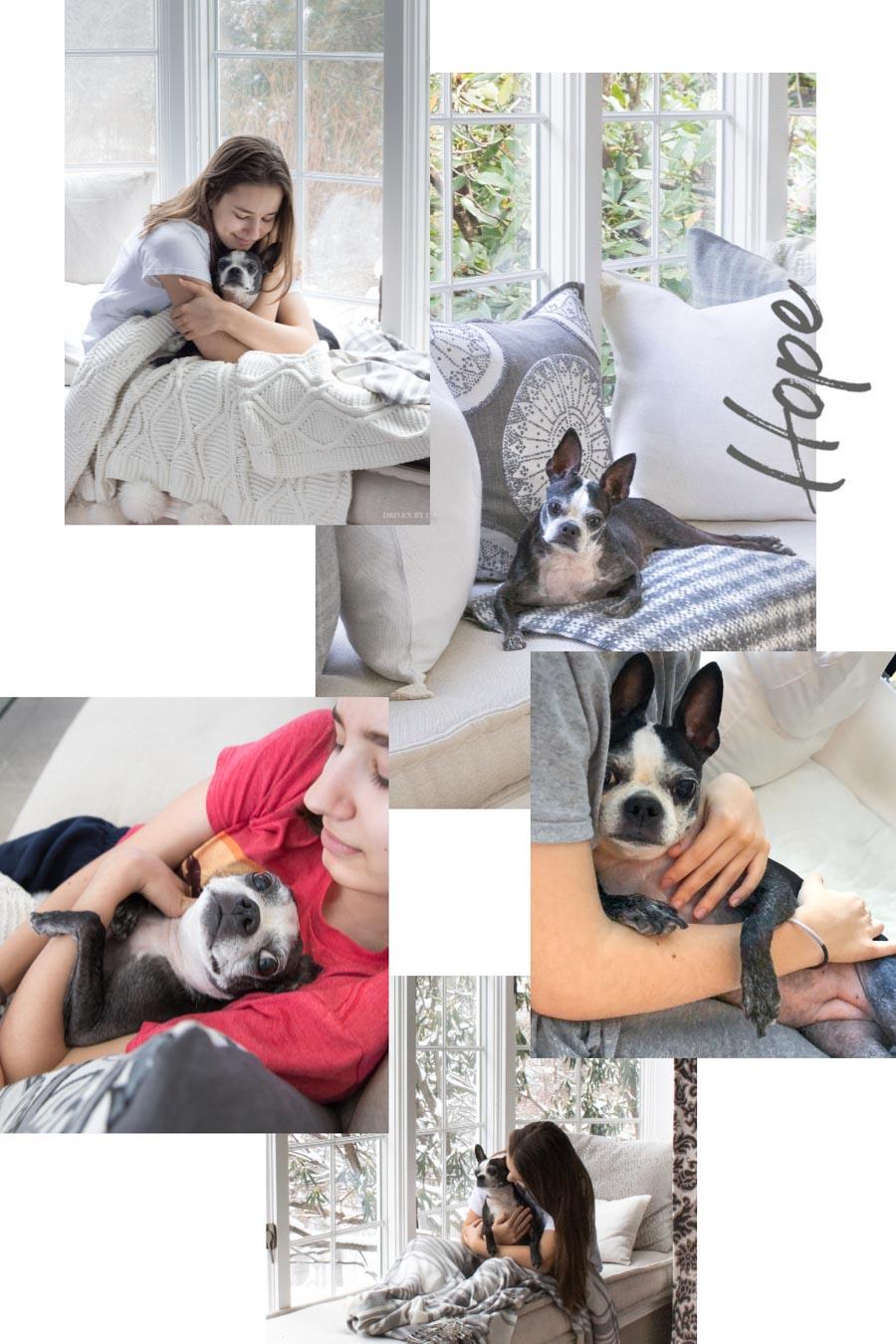 Our sweet Boston terrier