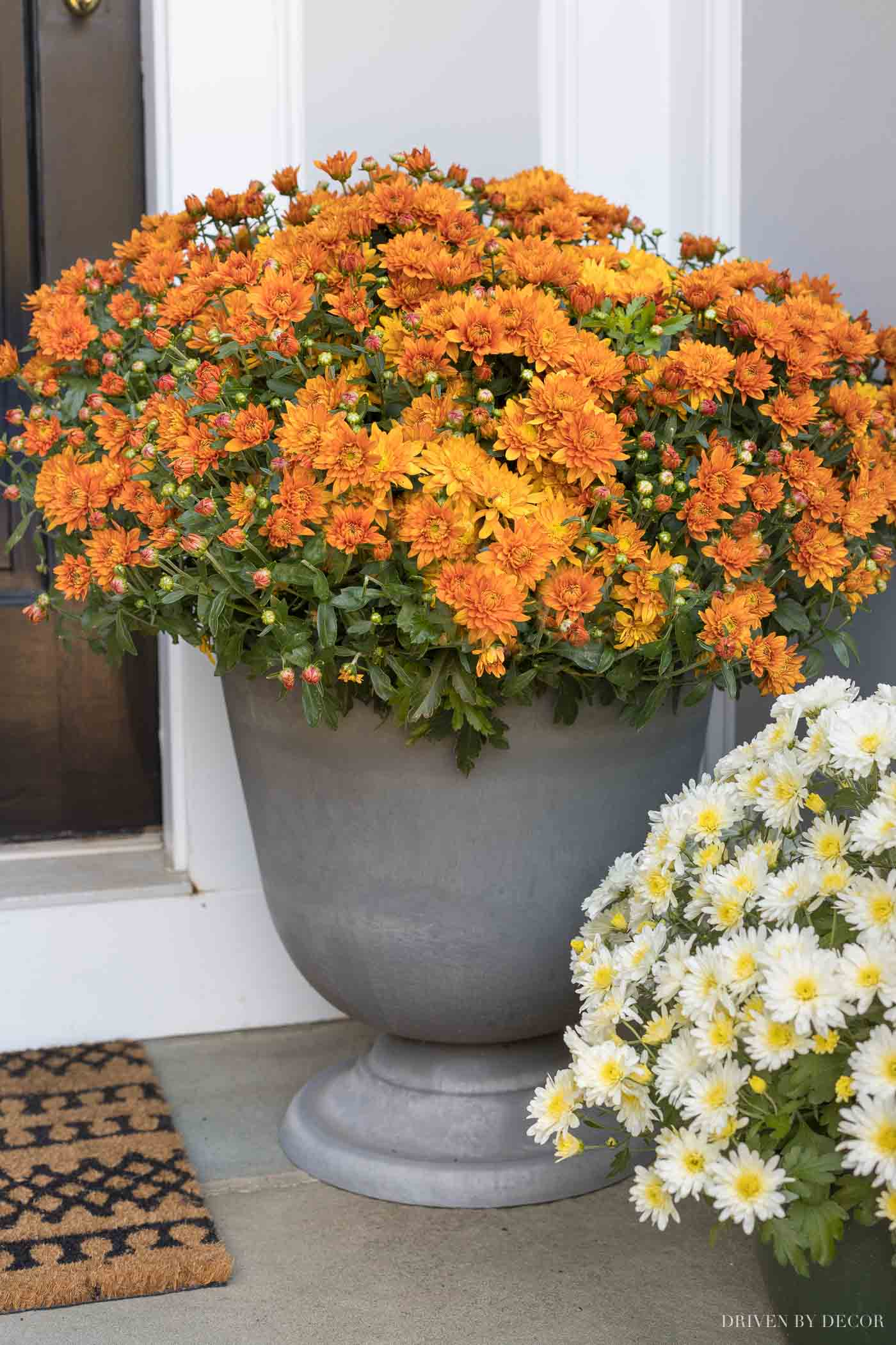 Love these inexpensive urn planters as part of our front porch fall decor!