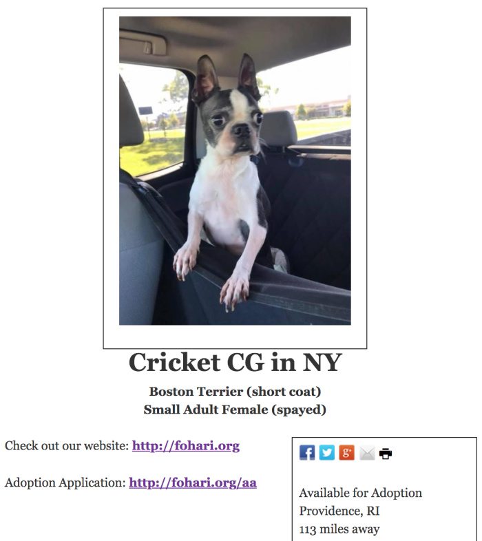 Cricket's adoption listing