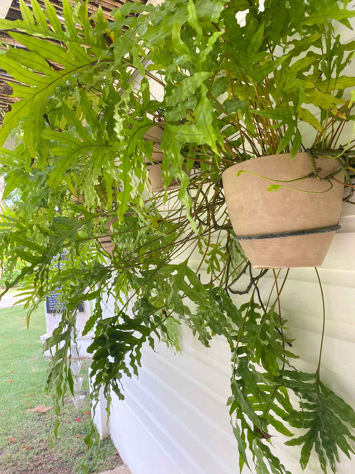 Use wall mounted plant holders to create a gorgeous outdoor accent wall!
